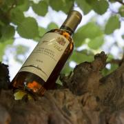 Volognano • Chianti's Vin santo