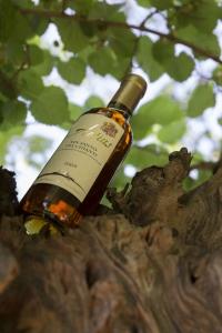 Volognano • taste Vin Santo
