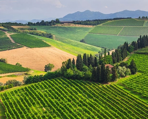 wine tours from florence - chianti
