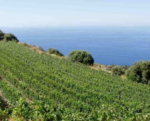 best wineries in tuscany - Capo d'uomo