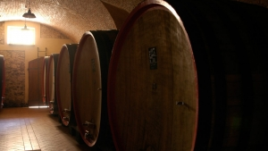 wine tour in toscana - pisa
