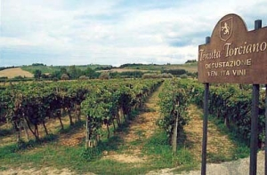 best wineries in tuscany - tenuta torciano