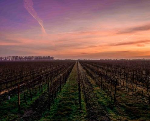 migliori cantine degustazione vini in Toscana