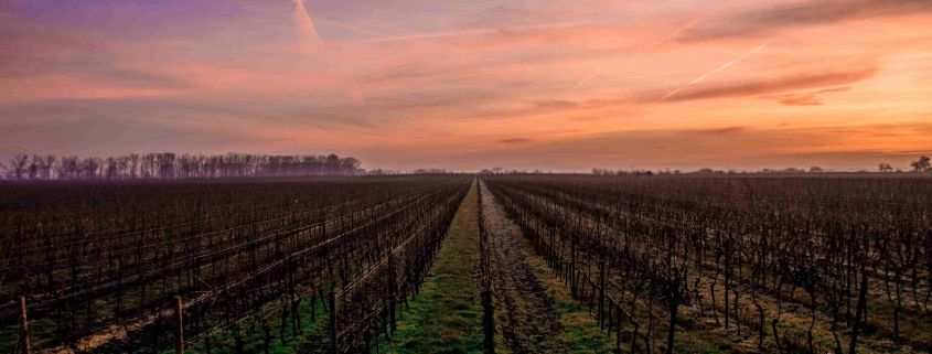 top wineries in tuscany