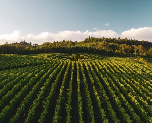 wineries in tuscany