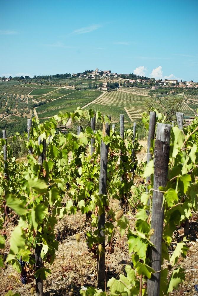 Siena to Florence: viti