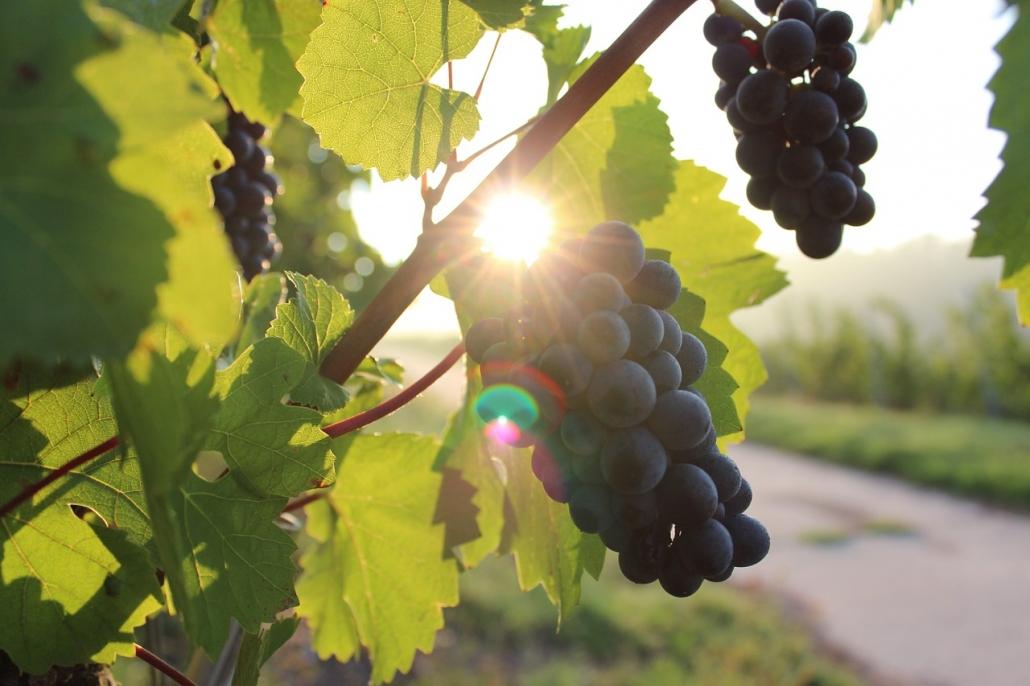 Wine tour organizzati dai migliori hotel della campagna toscana